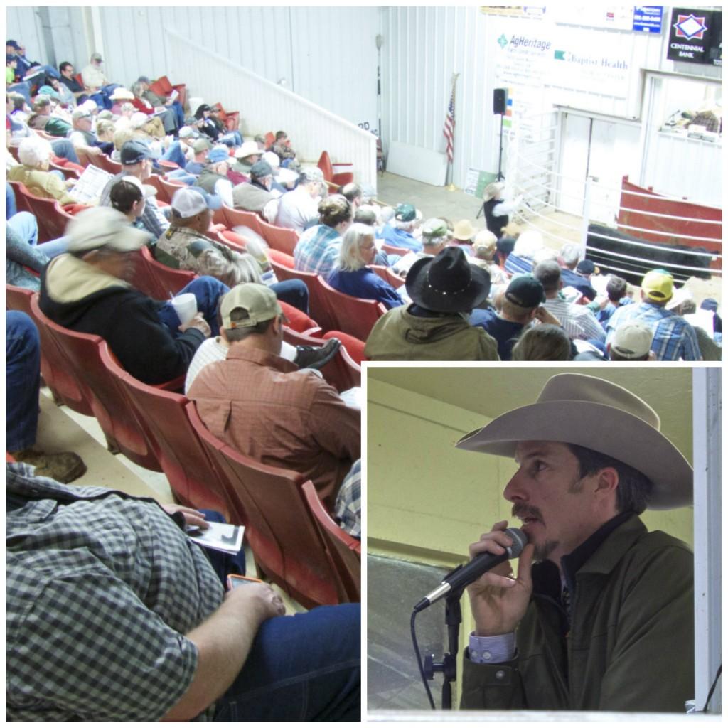 Arkansas Bull Sale 2016 6