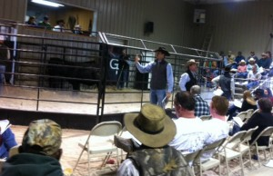 Luke Mobley and Steve Sellers around the ring at Gibbs 2014 Sale