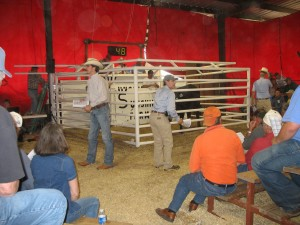 Luke Mobley, Jack Hedrick and Jimmy Fetner at Sunshine Farms Sale