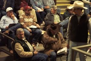 Luke Mobley at a sale in Calhoun, GA