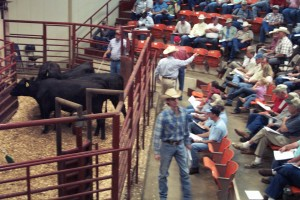Luke Mobley and Jimmy Fetner at the Alabama Cattlemen's BCIA Sale