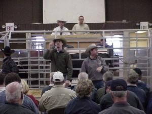 David, Luke & Steve at the Calhoun Bull Test Sale