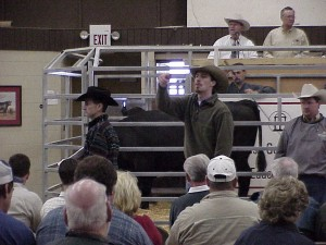 David Gazda, Luke Mobley, Steve Sellers and Geriald Bowie in the block @ Calhoun Bull Test Sale