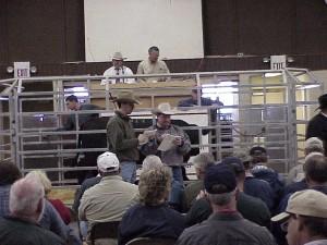 Luke mobley & Steve Sellers At the Calhoun Bull Sale