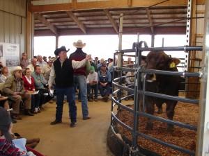 Mike Ryan and Luke Mobley @ Ridgefield Farms Braunvieh Sale 2010