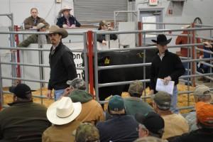 Luke Mobley & David Gazda At the Tifton Bull Test Sale