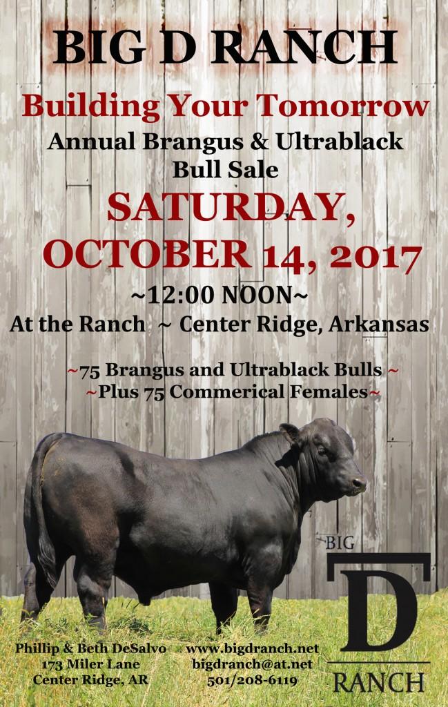 Brangus Bull Arkansas Ultrablack